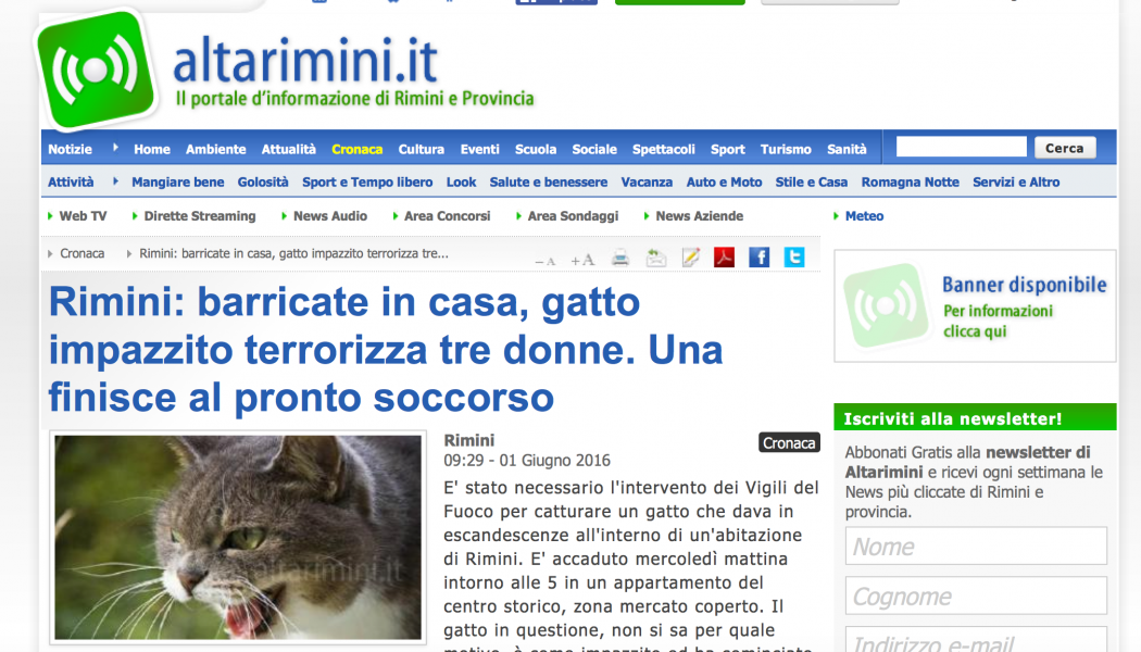 (NOTIZIE DA BUTTARE) Rimini: barricate in casa, gatto impazzito terrorizza tre donne. Una finisce al pronto soccorso