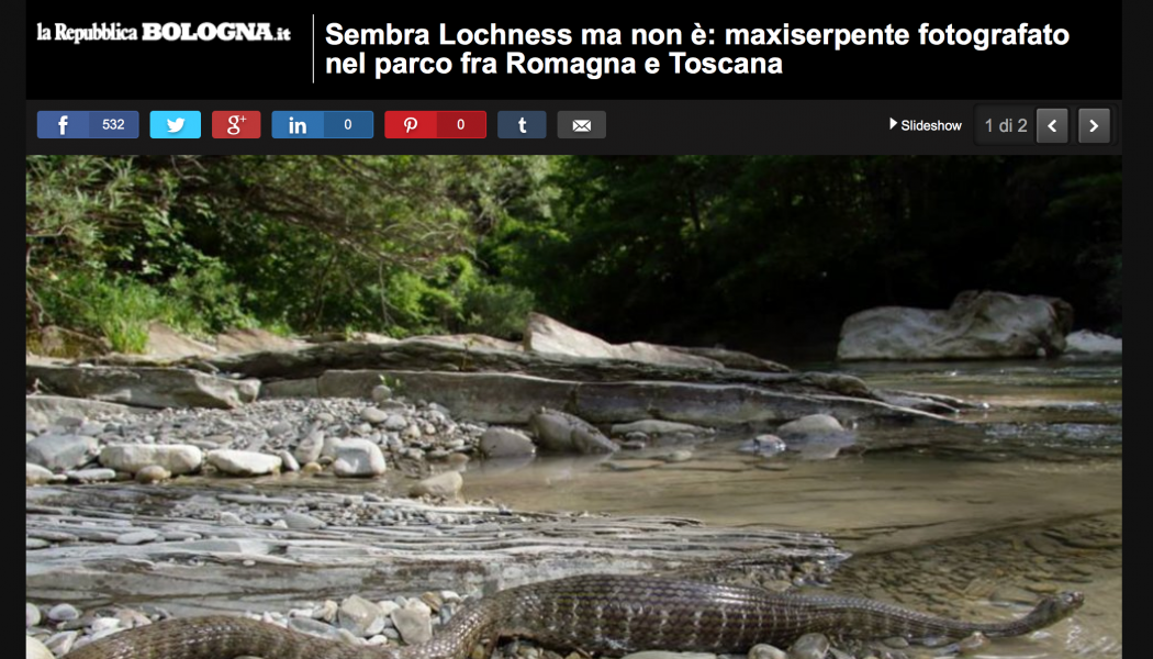 (NOTIZIE DA BUTTARE) Sembra Lochness ma non è: maxiserpente fotografato nel parco fra Romagna e Toscana