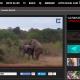 (NOTIZIE DA BUTTARE) Prova ad accoppiarsi davanti ai turisti: ma l'elefante cade rovinosamente