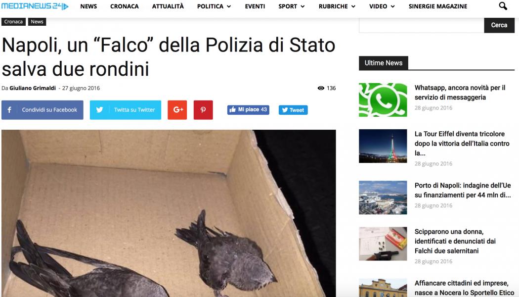"""(NOTIZIE DA BUTTARE) Napoli, un """"Falco"""" della Polizia di Stato salva due rondini"""